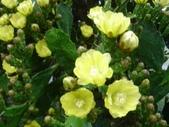 松濤營地動植物5-14:DSC02550.JPG