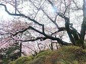日本 平成時期的最後櫻花...2019 4月:766E5C15-FD45-49F5-A6F6-DDDBD75F0D98_調整大小.jpg