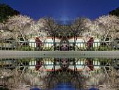2021 至善公園 梅花林:IMG_20210114_175346n_調整大小.jpg