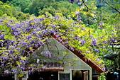 粗坑窯 紫藤:DSC_9813_調整大小.JPG