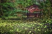 華梵大學的螢火蟲:S__547479562.jpg