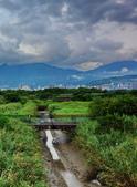 社子濕地: