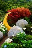 竹子湖 海芋季 大賞園:DSC_0305_調整大小.JPG