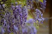 粗坑窯 紫藤:DSC_9819_調整大小.JPG