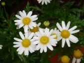 松濤營地動植物5-14:DSC02571.JPG