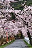 日本櫻花見:16E0DEDE-A805-446A-A83E-01229F2537AB_調整大小.jpg