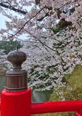 日本櫻花見:20BE0C0D-2E4C-4DB6-8E11-192BE7C071A5_調整大小.jpg
