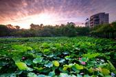 植物園夕彩:DSC_2950_調整大小.JPG
