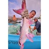 漁人碼頭:相簿封面