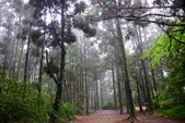 紫籐霧雨:DSC_6033_調整大小.JPG