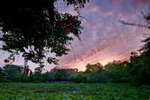 植物園夕彩:DSC_2959_調整大小.JPG