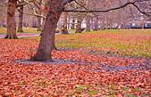 英國 白金漢宮 公園:DSC_0119_調整大小.JPG