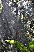 溪頭 景觀 2/27   _1:旋轉對象 _DSC0105.JPG