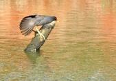 七股水鳥:_DSC0072.JPG