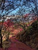 白毛台山  櫻花:IMG_20210213_092615_調整大小.jpg