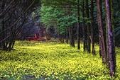 華梵大學的螢火蟲:S__547479557.jpg