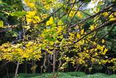 銀杏森林:DSC_0056_調整大小.JPG
