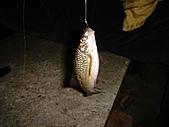 竹子湖12-30:DSC01783.JPG