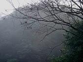 景觀-平湖露營埸98-12-13:DSC06535.JPG