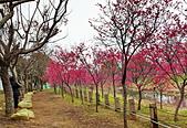 中科崴立櫻花公園 櫻花賞:IMG_20210212_161102_調整大小.jpg