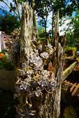 銀杏森林:DSC_0185_調整大小.JPG
