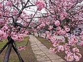 中科崴立櫻花公園 櫻花賞:IMG_20210212_161623_調整大小.jpg