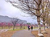中科崴立櫻花公園 櫻花賞:IMG_20210212_163414_調整大小.jpg