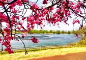 日本 平成時期的最後櫻花...2019 4月:F24BE967-E650-42FF-8614-01CD23C919C6_調整大小.jpg