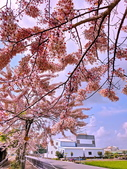 2020 與春天有約 三月 花旗木:IMG_20200327_090453_調整大小.jpg