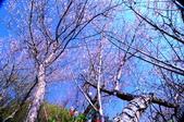 棲蘭山莊賞梅:DSC_0276_調整大小.jpg