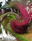 陽明山 櫻花+1:DSC_0005_調整大小.JPG