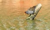 七股水鳥:_DSC0075.JPG