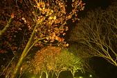 陽明山之夜 2019:DSC_0477_調整大小.JPG