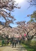 弘前公園 櫻花祭 花見:3C65E67F-0DAA-4B7C-81C1-667386EA4FE3_調整大小.jpg