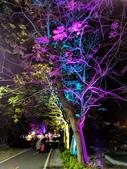 石岡 花漾藝術燈會:IMG_20210212_210002_調整大小.jpg