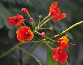 台南的花:_DSC0007.JPG