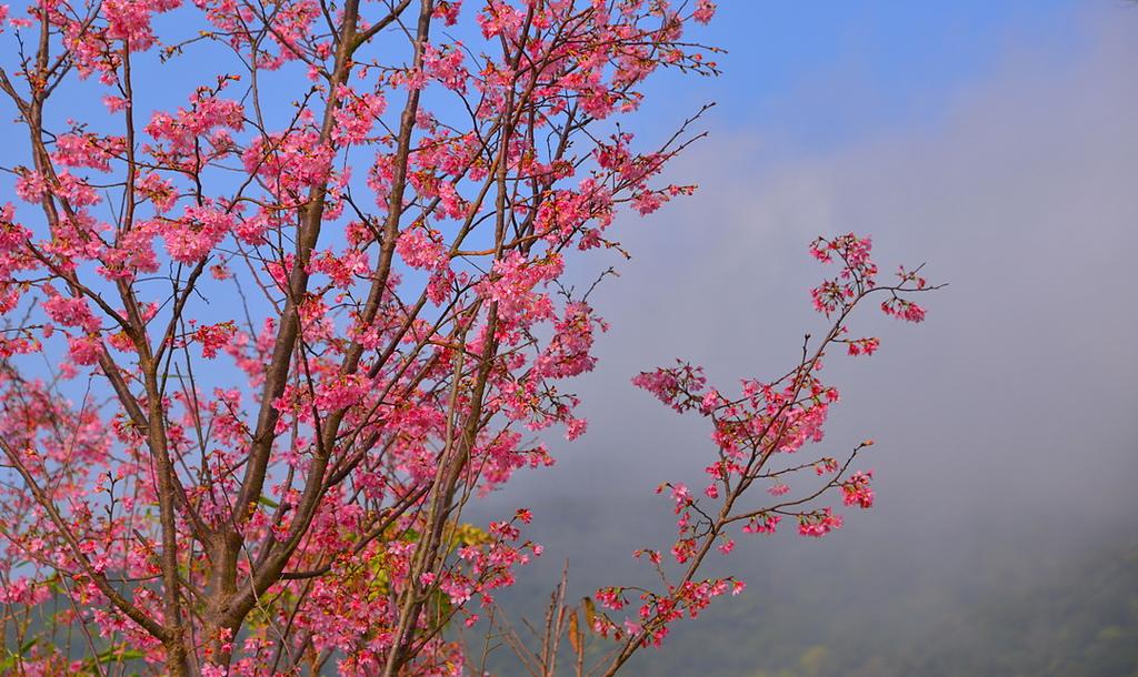 繽紛 陽明山 2019:DSC_0137_調整大小.JPG