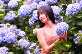 繡球花ˊ習拍:DSC_0123_調整大小.JPG