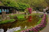 陽明山 櫻花+1:DSC_0057_調整大小.JPG