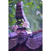 峭壁的精靈~艷紅鹿子百合:相簿封面