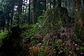 太平山11-5-98:IMG_0579.JPG