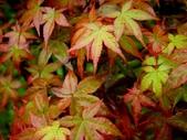 松濤營地動植物5-14:DSC02554.JPG