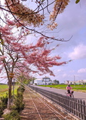 三月櫻~熱力綻放 花旗木:IMG_20200327_090916_調整大小.jpg