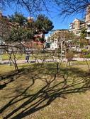 2021 至善公園 梅花林:IMG_20210115_093250_調整大小.jpg