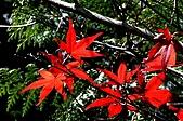 太平山11-5-98:IMG_0501.JPG