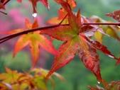 松濤營地動植物5-14:DSC02555.JPG