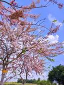 2020 與春天有約 三月 花旗木:IMG_20200327_093504_調整大小.jpg