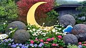 竹子湖 海芋季 大賞園:1.jpg