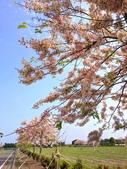 2020 與春天有約 三月 花旗木:IMG_20200327_085907_調整大小.jpg