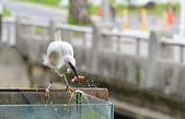 遇見 白鷺鷥:DSC_0216a_調整大小.jpg